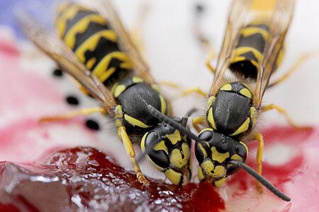 rsz_wasp-image_1
